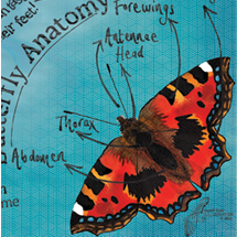 butterfly natural history poster
